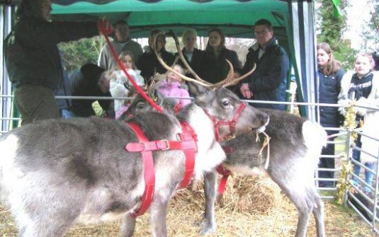 Hexham Reindeer